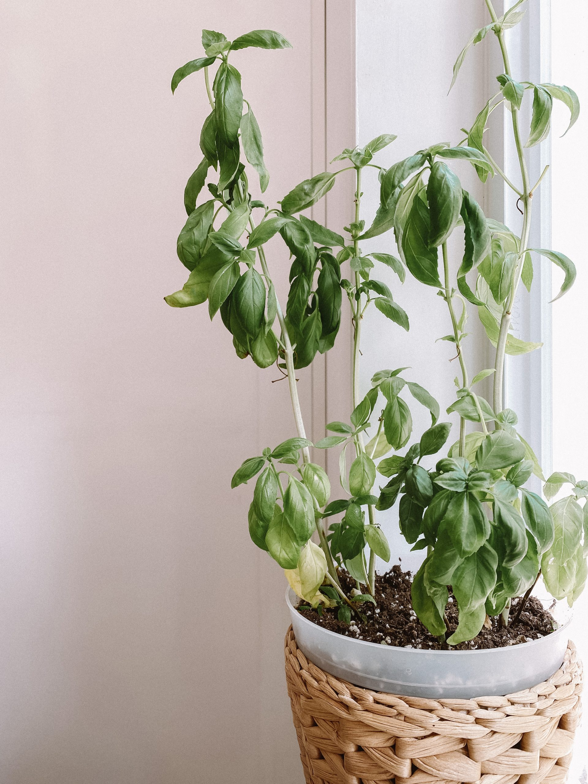 indoor plant care tips